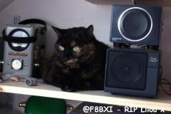 @F8BXI - RIP Lilou x