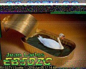 swan-in-a-sardine-tin