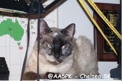 @AA5PK - Chelsea SK