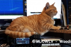 @MU0WLV-Woodie