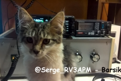 @Serge_RV3APM - Barsik