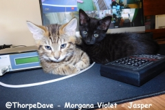@ThorpeDave-Morgana-Violet-Jasper