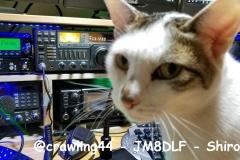 @crawling44-JM8DLF-Shiroko