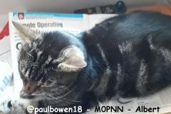 @paulbowen18 - M0PNN - Albert