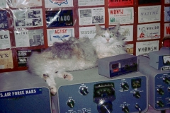 Sassy staying warm on the transmitter3